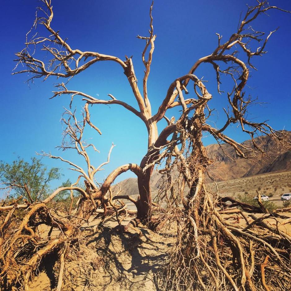 Death Valley victim